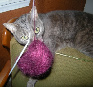 dexter captures yarn ball