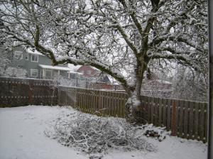 snow on walnut tree
