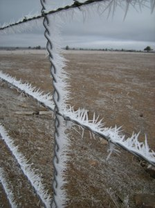 more frost on barbed wire