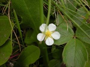 daisy type of flower